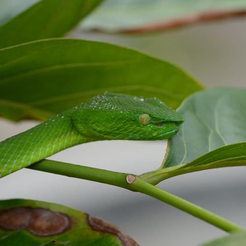 Как видят нас змеи?