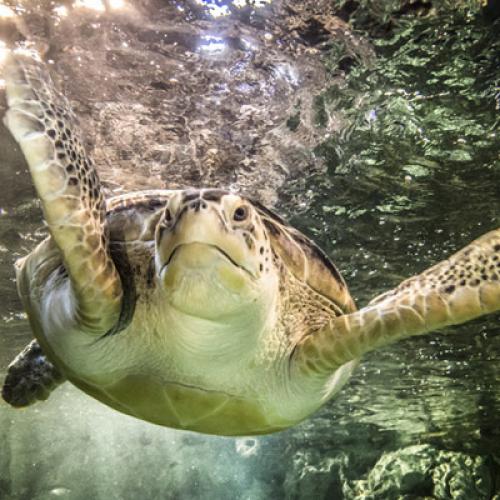 Людей и черепах объединяет общий предок