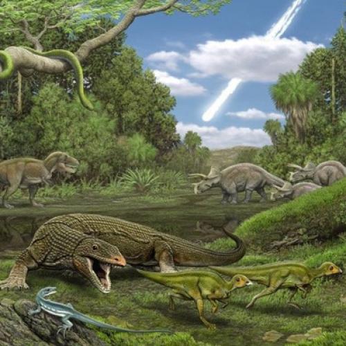 Неожиданная находка останков предков Игуан