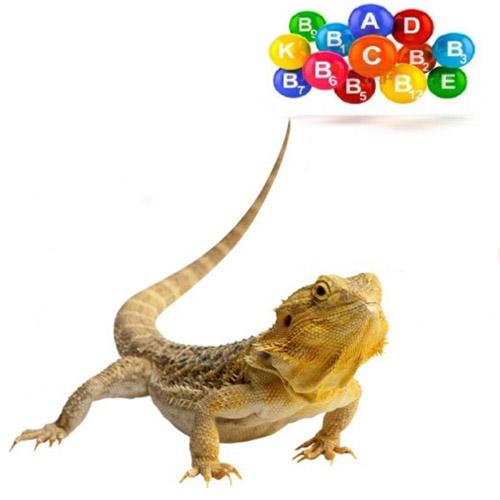 О пользе витаминов для рептилий