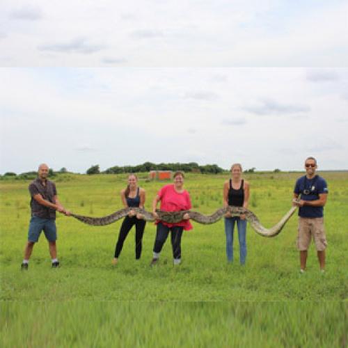 Огромные змеи наползают на Флориду