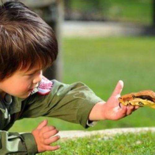 Выбор экзотического животного в качестве питомца для ребенка