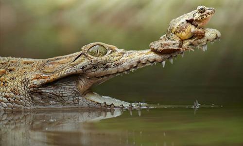 Новости в мире рептилий