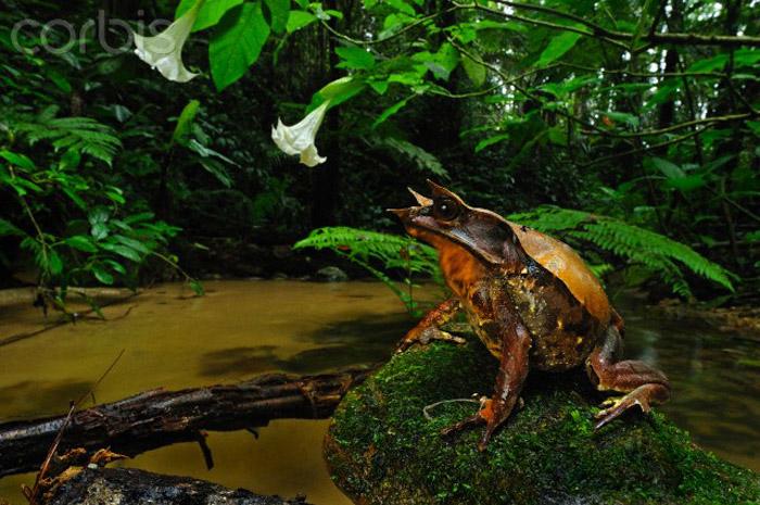 Происхождение и места обитания в природе: