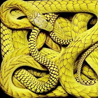 Змеиный сон – он важный самый