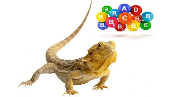 О пользе и необходимости витаминов для рептилий